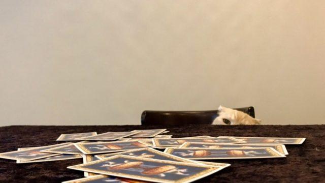 猫のタロット占い・初心者講座
